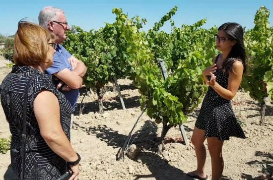 WINE AND FOOD TOUR in a winery among...