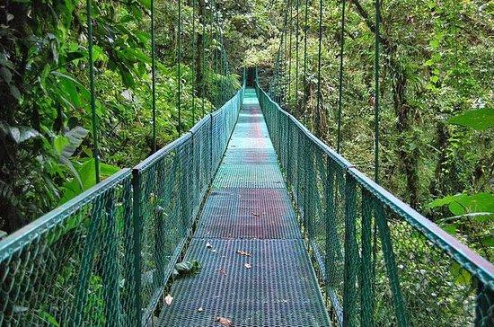 Full day Monteverde from San Jose hanging bridge and Reptile...