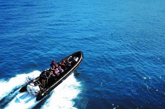 Loch Ness Speedboat Sightseeing Tour