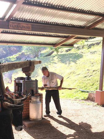 Desafio Monteverde Tours -  Day Tours: Señor Santa Maria of El Trapiche extracting juices from sugarcane
