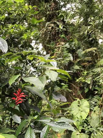 Desafio Monteverde Tours -  Day Tours: Delicate beauty of the cloud forest