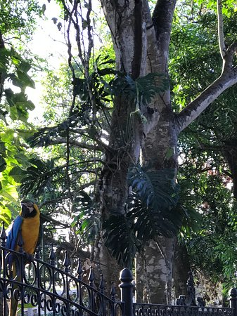 Desafio Monteverde Tours -  Day Tours: While macaw seeing us to the airport in Liberia.