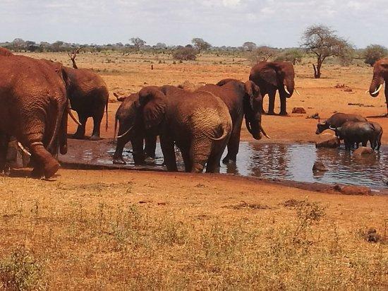 Voi, Kenya: IMG_20180215_131610_large.jpg
