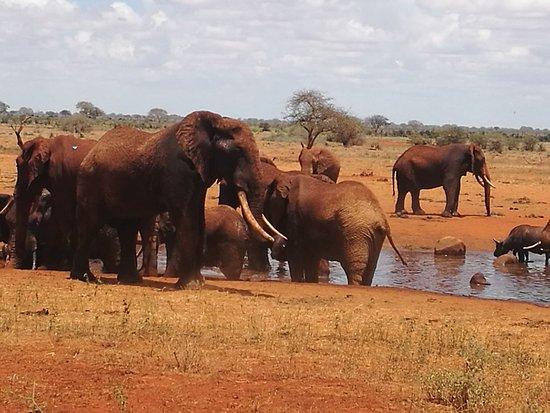 Voi, Kenya: IMG_20180215_131548_large.jpg