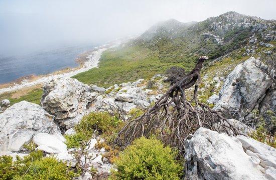 كيب تاون المركزية, جنوب أفريقيا: Cape peninsula