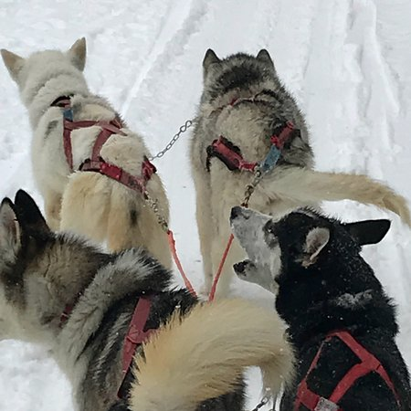 Centro Italiano Sleddog Husky Village : photo1.jpg