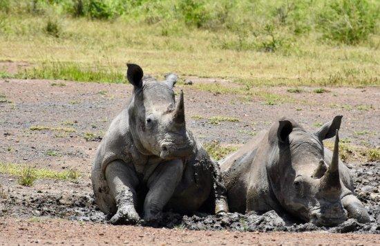 Zululand, África do Sul: viele Rhinos