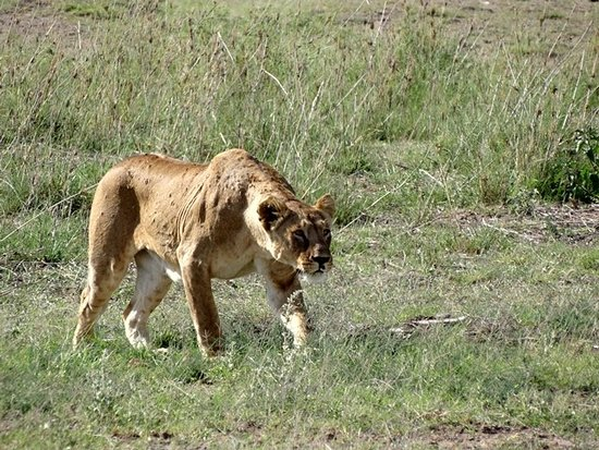 Amboseli National Park Foto
