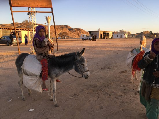 Qena Governorate, Egipt: Утро в пустыне.