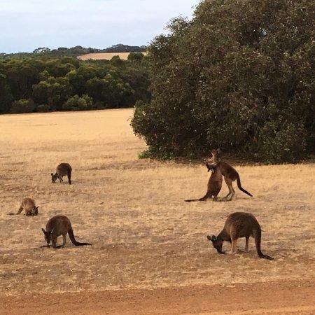 Seddon, Austrália: photo1.jpg