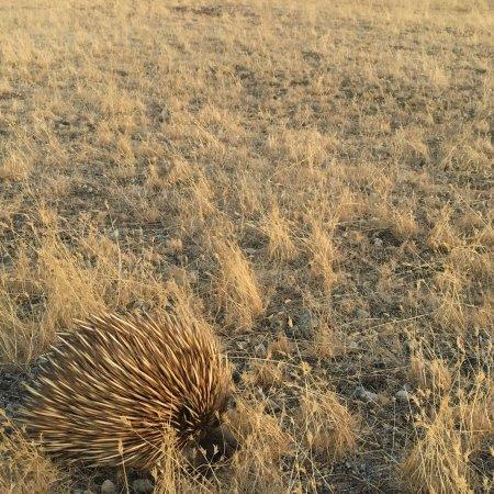 Seddon, Austrália: photo3.jpg