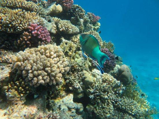Tiran Island : IMG_1635_large.jpg