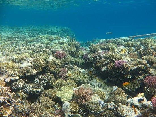 Tiran Island : IMG_1780_large.jpg