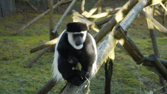 Belfast Zoo: No monkeying around