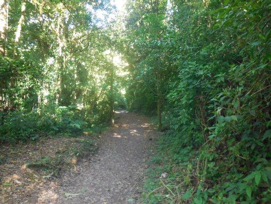 Monteverde Cloud Forest Biological Reserve: Walking trail in forest