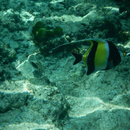 Similan Islands : photo1.jpg