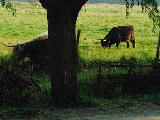 Het Zoute, بلجيكا: Prachtig zicht