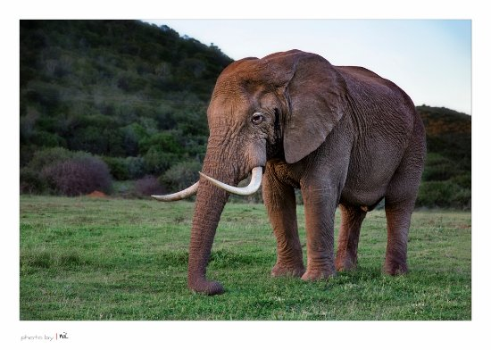 Kenton-on-Sea, South Africa: Elephant