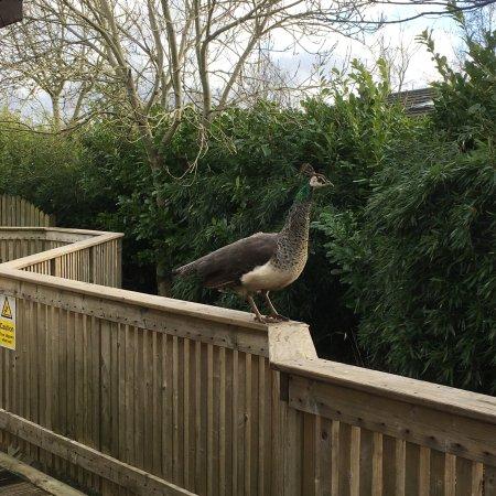 Gisburn, UK: photo0.jpg