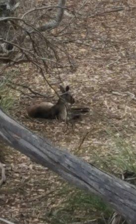 Hanson Bay, Australia: On the Wallaby trail