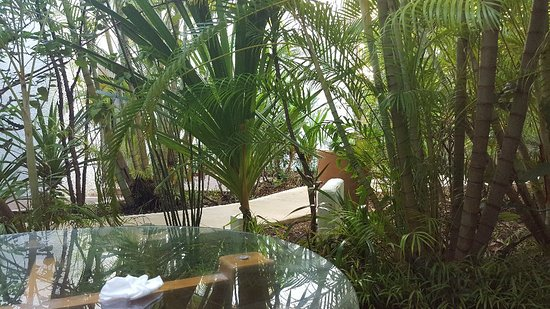 Sotavento Hotel & Yacht Club: 20180206_090635_large.jpg
