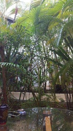 Sotavento Hotel & Yacht Club: 20180206_090647_large.jpg