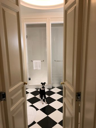 The Savoy: black and white on black and white (service dog)