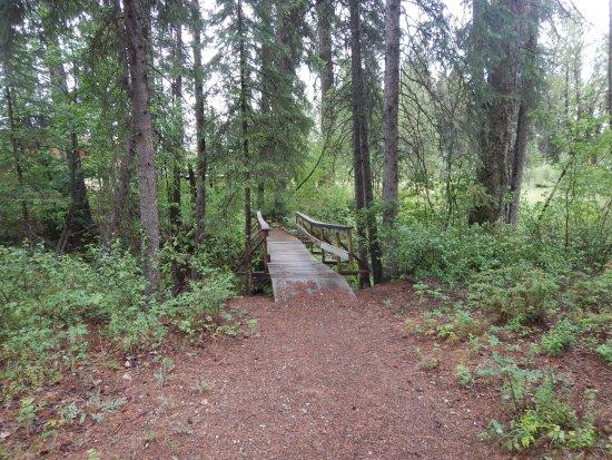 Skookumchuck, Kanada: Barney's Bridge  over the creek along the walking path