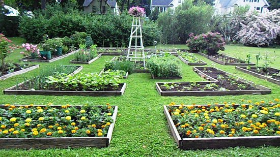 Our Vegetable Garden - Picture of Vintage Gardens Bed & Breakfast ...
