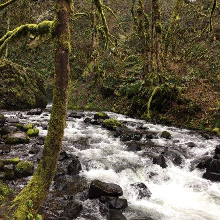 Zdjęcie Bike and Hike: Columbia River Gorge Adventure from Portland