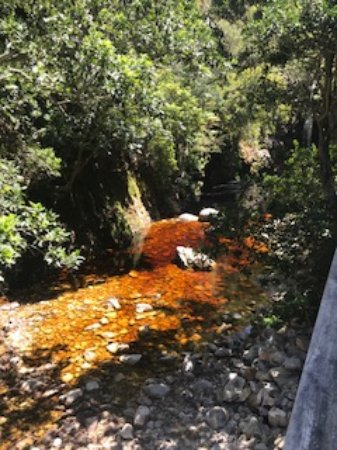 Harold Porter National Botanical Gardens: Streams in fynbos habitat are often 'tea brown' from tannins and lignins dissolved in the water.