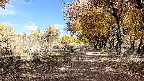 Willow Creek Trail, Rio Rancho, New Mexico. October 31, 2016.