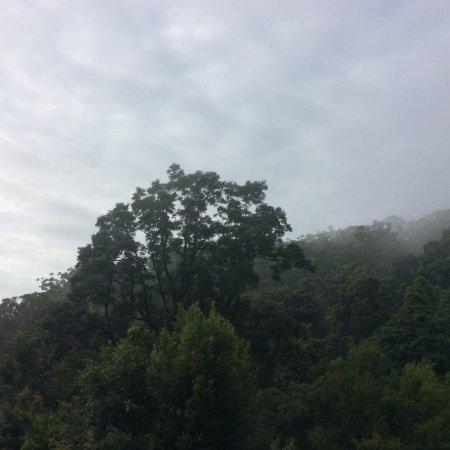 Upper Crystal Creek, Αυστραλία: photo9.jpg