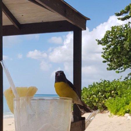 Turners Beach, Antigua: photo3.jpg
