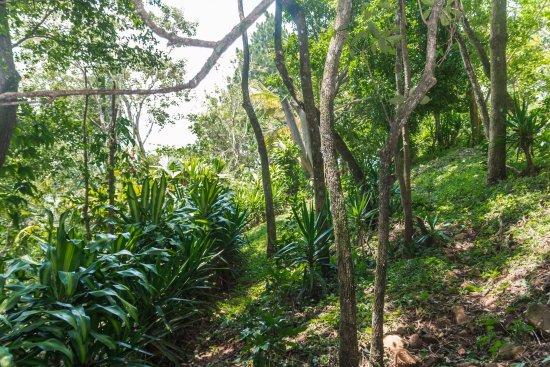 Atenas, Costa Rica: Jungle path in lower level garden