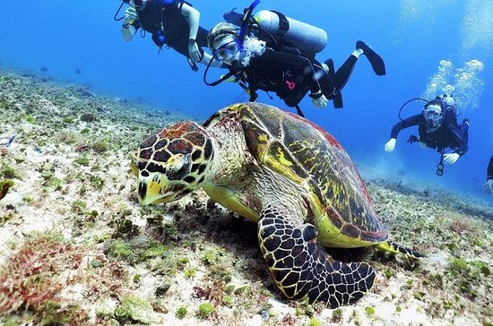 Discover Scuba Diving Course in Playa...
