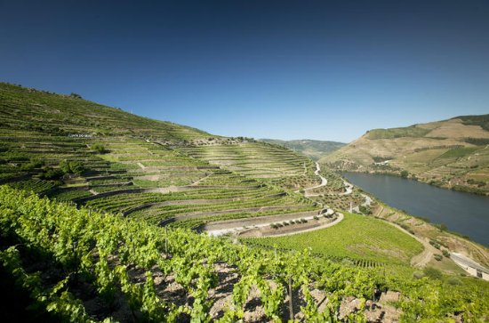 Douro Valley and Wine Day Trip from...