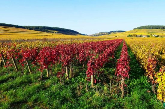 Private Castles of Burgundy Tour with ...