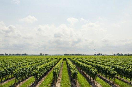 Transporte Privado de Vinhos