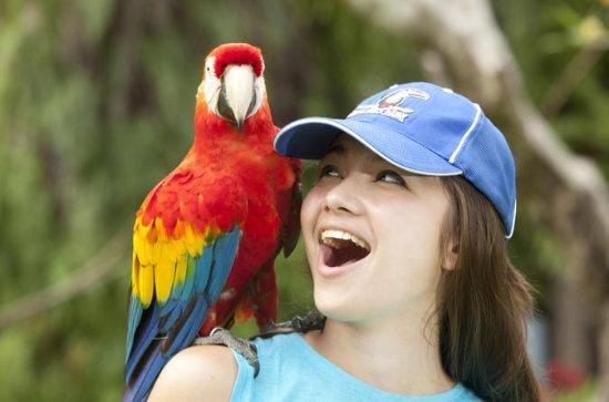 Discover Bali Bird Park
