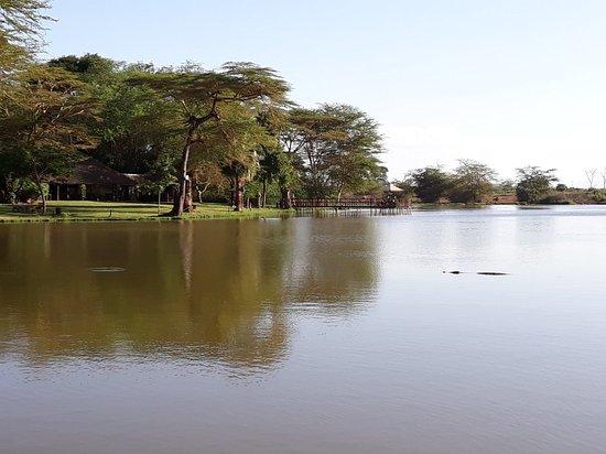 Voyager Ziwani, Tsavo West: 20180203_172537_large.jpg