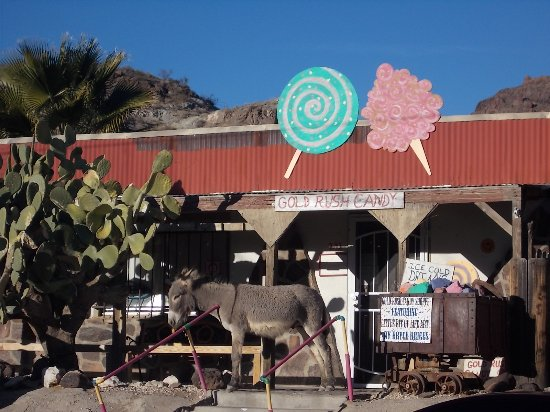 DO YOU SEE WHAT I SEE out in front of the Gold Rush Candy Shop, 241 Main St, Oatman, Arizona.