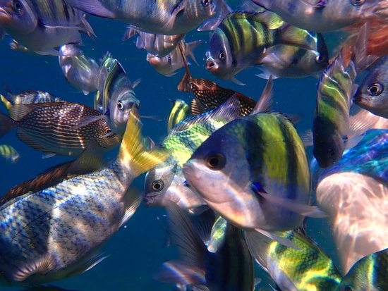 Phuket Snorkeling by  Offspray Leisure : More beautiful fish