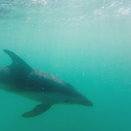Dolphin Encounter: photo0.jpg