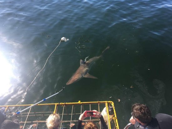 White Shark Diving Company: received_10216003895789295_large.jpg