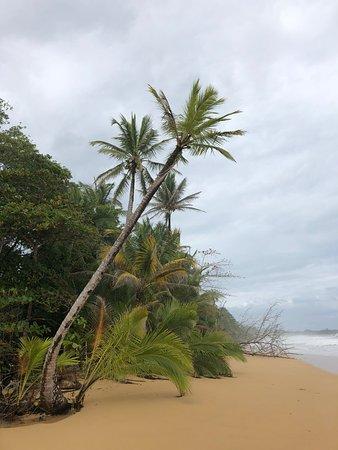 Playa Bluff: Beach view