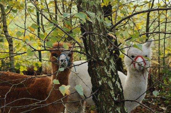 Gniezno, Polandia: Między drzewami