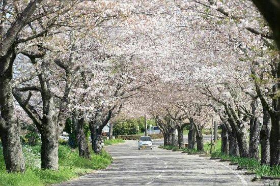 Tarumizu Park