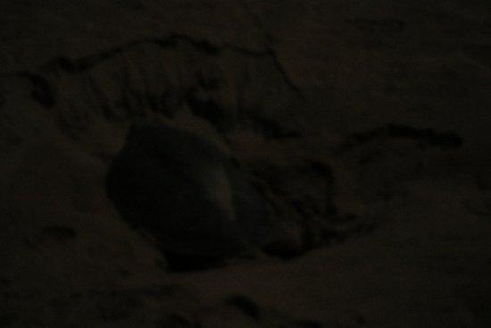 Al Hadd, Oman: Turtle Beach