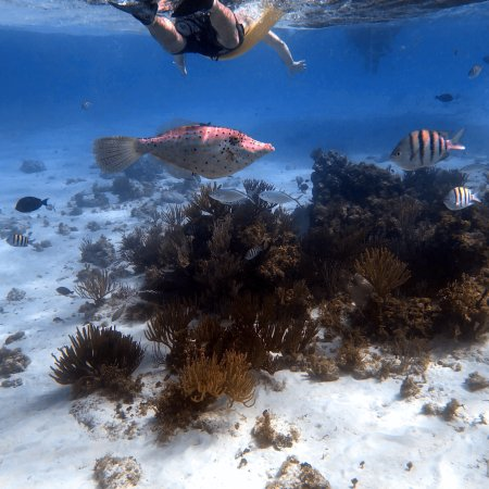 Fantasea Cayman Islands